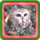 Owl Live Wallpaper by Fun Apps for Your Phone