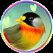 Best Bird Sounds & Ringtones by Hiba App - Ringtones 7