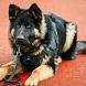 Fantastic Police Dog by PT Game Studio