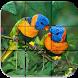 Birds Puzzle PRO