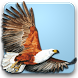 Roberts Multimedia Birds of SA by Gibbon Multimedia