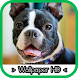 Boston Terrier Wallpapers by silva