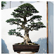 Wonderful Bonsai Plants