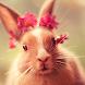 cute bunny live wallpaper by Dark cool wallpaper llc