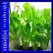Hydroponics plants by YANDAAPPS