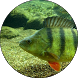 Рыбалка летом by vivakniga
