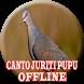 O canto da juriti pupu (OFFLINE) by Rindu Ayah