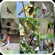 Canto de Pássaros Brasileiros by luckystar art