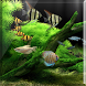 Lucky Fish Tank LiveWallpaper