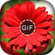 Flower GIF 2018 - Rose GIF 2018 by Vitro Graphics