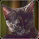 Kitten Story by Gamer Lips