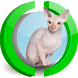 Sphynx Cat Live Wallpaper by Hunter Image