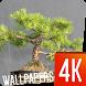 Bonsai Wallpapers 4K by Ultra Wallpapers