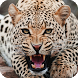 Jaguar Live Wallpaper by GlobalWallpapers