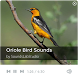 Oriole Bird Sounds by SoundsLabStudio