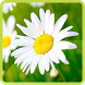 Nature Flowers Wallpaper by Flying Application Creator