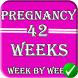 pregnancy stages by PDGApp