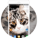 Theme for Spice Pinnacle Pro Kitty Wallpaper