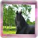 סוסים - המדריך המלא