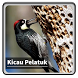Kicau Suara Burung Pelatuk by kangdeveloperstudio