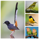 Top Suara Burung Berkicau Offline by Smanxar Studio
