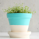 Flower Pot Ideas by margus