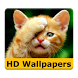 Cat wallpapers and funny pics by APP-6