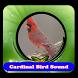 Cantos de Cardeal|100% Offline by Putra dan Putri Dev