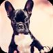 French Bulldog Images by Dakota Inc.