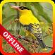 Master Burung Kepodang Emas Offline by ddwip apps