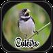 Canto de Coleiro by jsmedia app