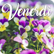 Venerdì by V.S.J studio