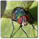 Fly Vision Camera - Bug eyes by Green Leaf Productions