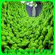 Hydroponics Plants by Tatadroid