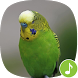Appp.io - Parakeet Sounds by Appp.io