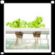 Hydroponic Farming by Dinda Maulidina