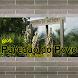 Web Rádio Paredão do Povo by Hélio Tecnologias