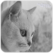 Cat Puzzles:แมว จิ๊กซอว์