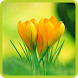 Flower Wallpapers by Flying Application Creator