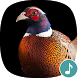 Appp.io - Pheasant Sounds by Appp.io