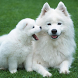 Dogs Wallpapers