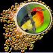 Aves do Brasil - Uirapuru by Raja Burung App