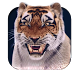 Young Tiger 3D Live Wallpap by BusaccaBuskin
