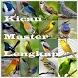 Kicau Burung Master Lengkap by CB Apps