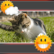 Cats Clock And Weather by Super Clock and Weather