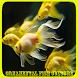 Ornamental Fish Culture by Tatadroid
