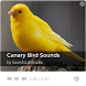 Canary Bird Sounds by SoundsLabStudio