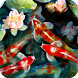 Koi Fish Live Wallpaper by WallpapersLove
