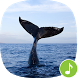Appp.io - Whale Sounds by Appp.io