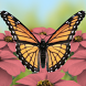 Butterflies 3D Live Wallpaper by 1Manband Studios